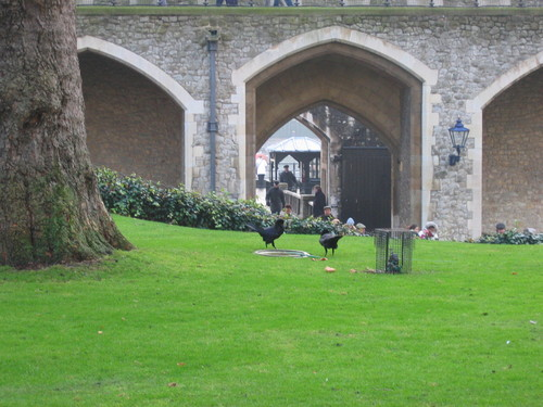 The Ravens at the Tower